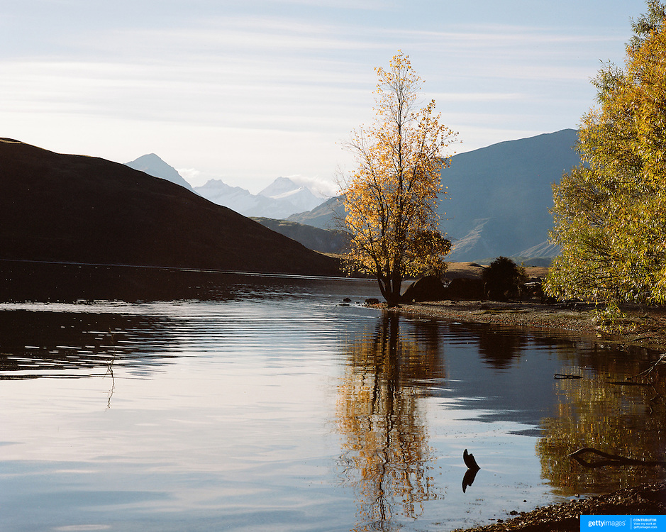 A tranquil scene at Glendhu Bay on the edge of Lake Wanaka showing Mount Aspiring in the distance as the leaves on the trees change color as Autumn approaches. Wanaka is  a year round tourist destination set against the pristine alpine backdrop of Mount Aspiring National Park in Central Otago. South Island, New Zealand. Photo Tim Clayton