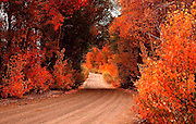 Blazing Fall Color Surrounds North Lake Road in the Eastern Sierra of California