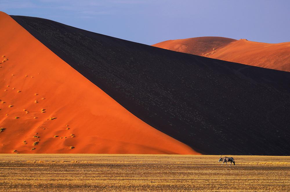Gemsbok (Oryx gazella), Sand Dunes, Sossusvlei area, Namib Naukluft National Park, Hardap Region, Namibia..