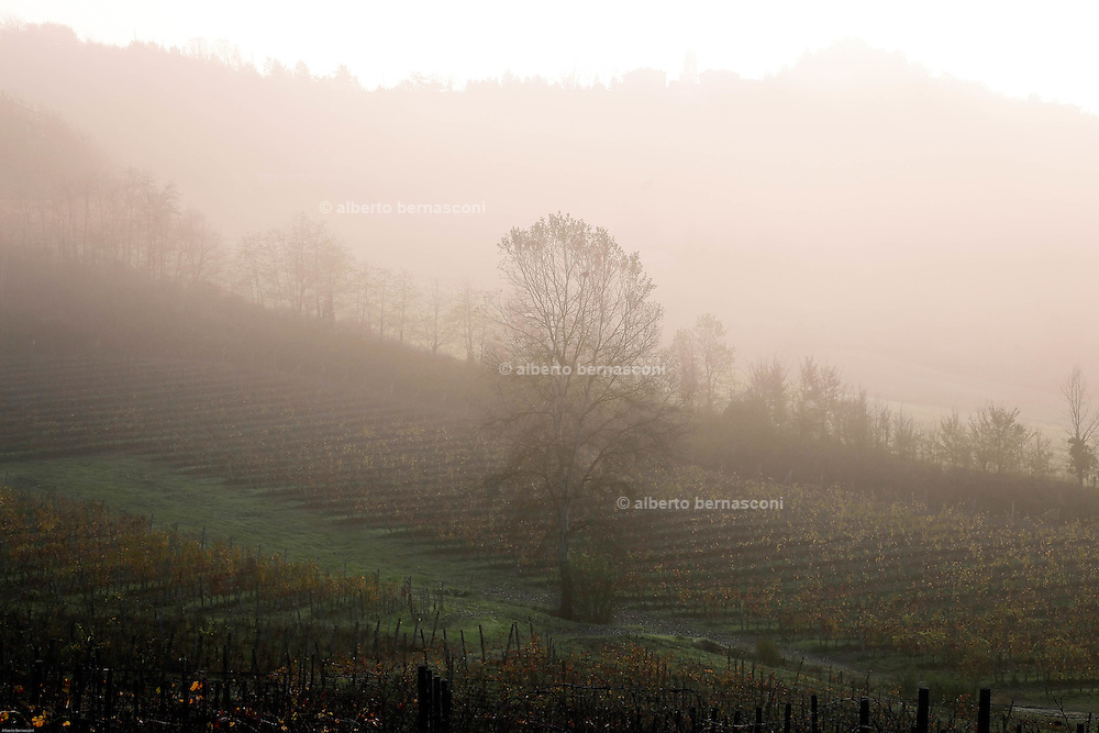 COVIBIO, COLLECTIVE wine producers , Italy, Piemonte