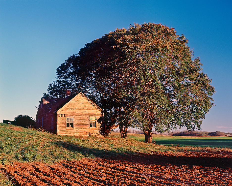 Abandoned farm, with tree and plowed field Mattituck, New York, clear day