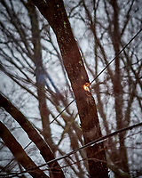 Live Wire burning a tree during a Nor'easter. Image taken with a Nikon D5 camera and 300 mm f/4 lens (ISO 1000, 300 mm, f/4, 1/320 sec).