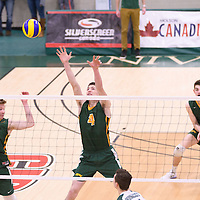2nd year middle Cody Caldwell (4) of the Regina Cougars in action during Men's Volleyball home game on November 18 at Centre for Kinesiology, Health and Sport. Credit: /Arthur Images