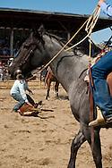 Wilsall Ranch Rodeo, Montana, Team Branding, Lazy SR Ranch Team, Kurt Mraz, Cleve Swandal