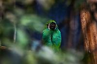 Toucanet a croupion rouge: Crimson-rumped toucanet (Aulacorhynchus haematopygus) Cette espece estendemiquede lazone neotropicale(Equateur,ColombieetVenezuela). Considere comme l'un des plus importants parcs ornithologiques en Europe, le Parc des Oiseaux presente une collection d'oiseaux exceptionnelle de plus de 3000 individus, representant pres de 300 especes originaires de tous les continents.