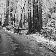 One Lane Road - Butano State Park, CA - Infrared Black & White