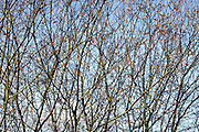 twigs with some leaves against a blue sky