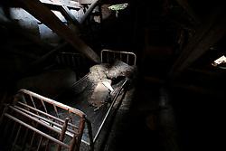 CZECH REPUBLIC VYSOCINA NEDVEZI 3AUG14 - Detail view of the derelict Konvalina farm buildings in Nedvezi, Vysocina, Czech Republic.<br /> <br /> <br /> <br /> jre/Photo by Jiri Rezac<br /> <br /> © Jiri Rezac 2014