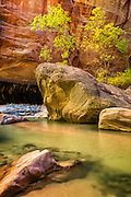 Scenic Photo of The Narrows at Zion National Park in Utah