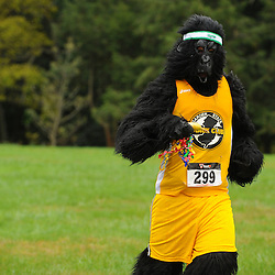 2012 Garden State TC Get The Gorilla 5K - Open