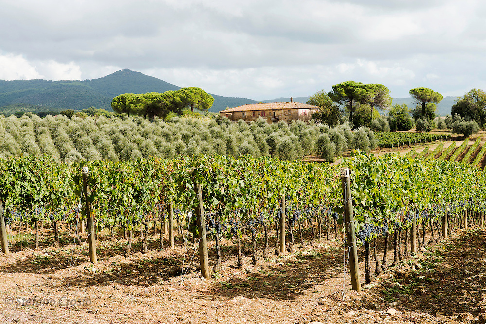 ITALY, Bolgheri (LI)