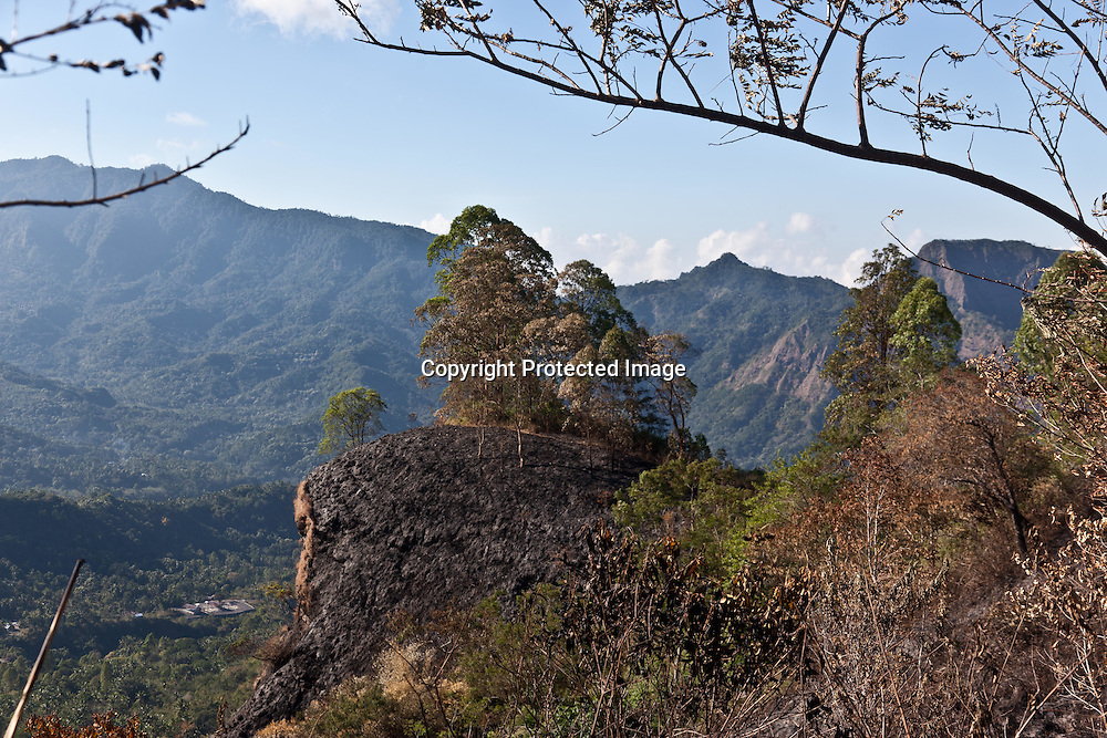INDONESIA, Flores Archipelago, Ngada country, in the forest