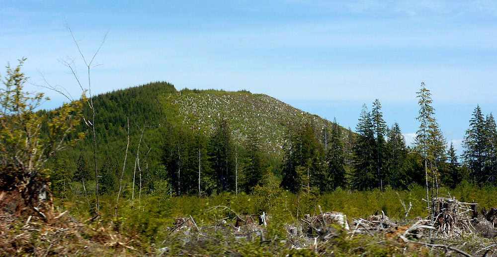 Evidence of logging near Olympic National Park, Washington.
