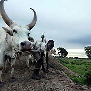South Sudan Cattle Camp