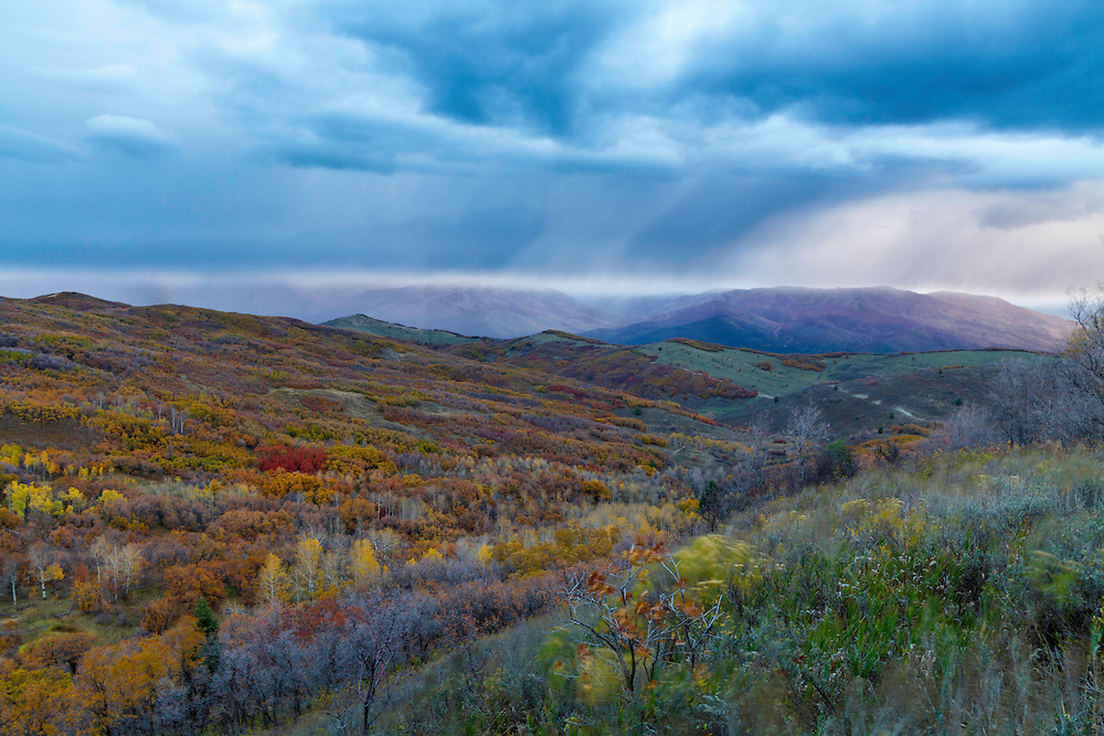 Fall colors along Trappers Loop Road in Ogden Canyon at sunrise as a storm rolls through the mountains in Utah.