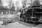 29/4/1966<br /> 4/29/1966<br /> 29 April 1966<br /> <br /> National Seafood Cook of 1966 at the Dublin Zoo.<br /> <br /> Miss Deirdre Lynch from Carrick on Shannon Co. Leitrim, Winner of the National Seafood Cook of the Year by Bord Iascaigh Mara fed Bim the Elephant seal