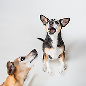 Dog treat catching contest