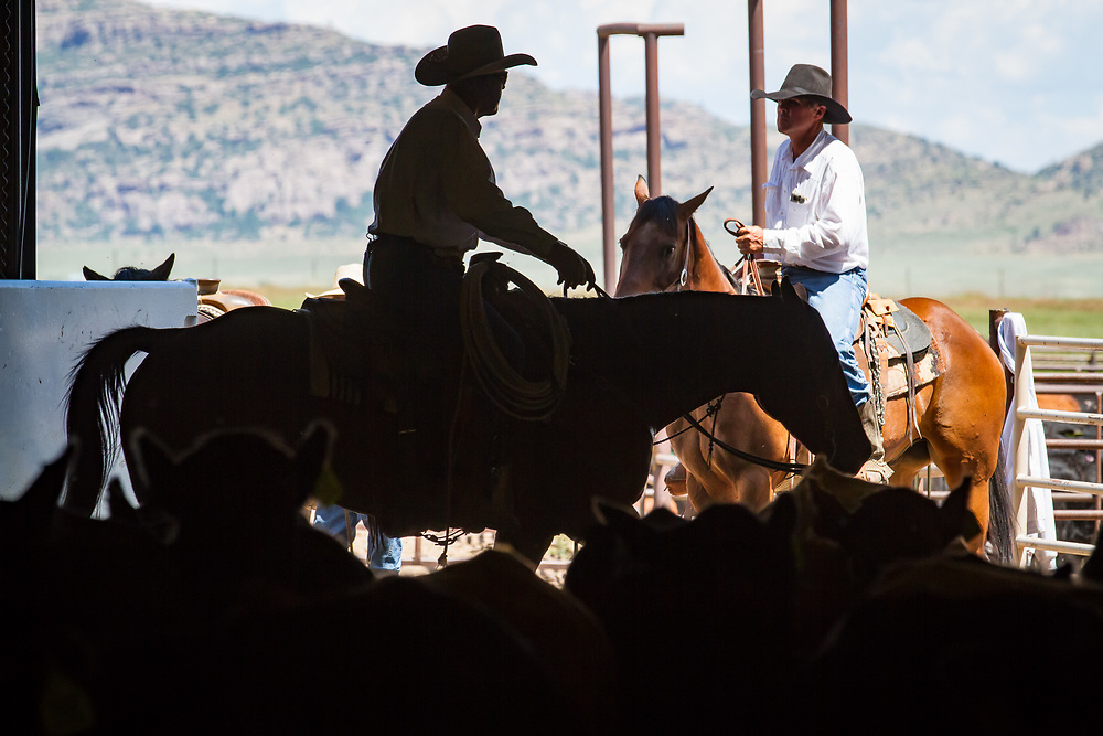 Scene from the 2017 Sangre de Cristo Summer Classic cutting horse competition in Westcliffe, CO.
