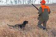 "Greg Windschill and his Lab ""Henry"" hunt pheasants near Mirchell South Dakota"