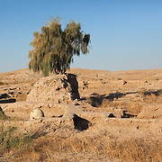 A tree stands at the original base of the earth prior to excavation of the archaeological site of Gonur Depe, Turkmenistan