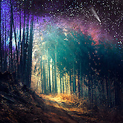 Surreal woodland scenery<br />