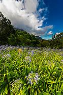 South Africa-Cape Town-Kirstenbosch National Botanical Garden