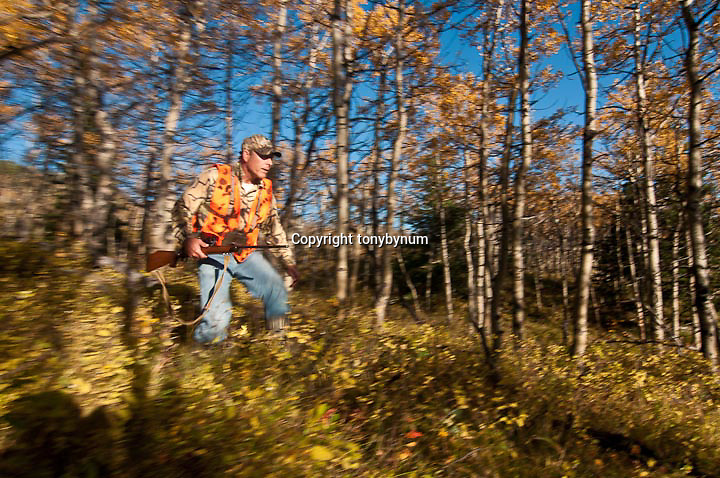 hunter rushing to get a shot edge of aspen trees, motion blur