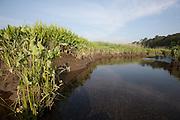 Fresh water tidal marsh; NJ, Manumuskin River wild and scenic