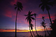 Palm trees at sunset<br />