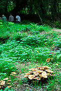 Mushrooms or toadstools in Krka National Park, Croatia