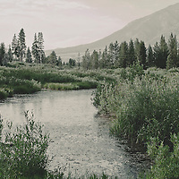 river and pine forest in America