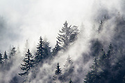 Picea (Picea abies)<br /> Swiss Alps, Switzerland<br /> Canon EOS-1D Mark IV+EF 500mm f/4L IS II USM+ 1.4x III<br /> 1/640 s at f/7.1 <br /> ISO 200<br /> Full frame<br /> No post-processing beyond lens profile and minor dust spotting, global saturation, exposure adjustment, noise reduction and sharpening.