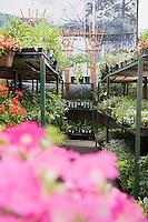 Plants on shelves in garden center