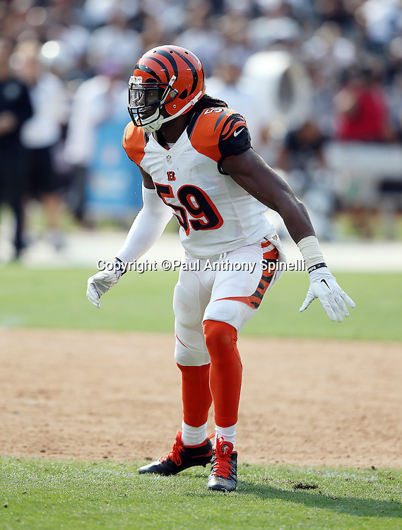 Cincinnati Bengals outside linebacker Emmanuel Lamur (59) chases the action during the 2015 NFL week 1 regular season football game against the Oakland Raiders on Sunday, Sept. 13, 2015 in Oakland, Calif. The Bengals won the game 33-13. (©Paul Anthony Spinelli)