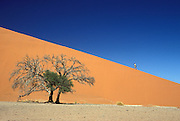 Southern Africa. Namibia. Sossusvlei in the Namib desert. A tourist climbs sand dune 45.