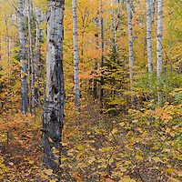 http://Duncan.co/amongst-the-trees