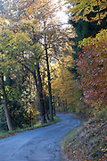Straße durch Wald, Schweizermühle, Bielatal, Sächsische Schweiz, Elbsandsteingebirge, Sachsen, Deutschland | road through forest, Schweizermühle, Bielatal, Saxon Switzerland, Saxony, Germany