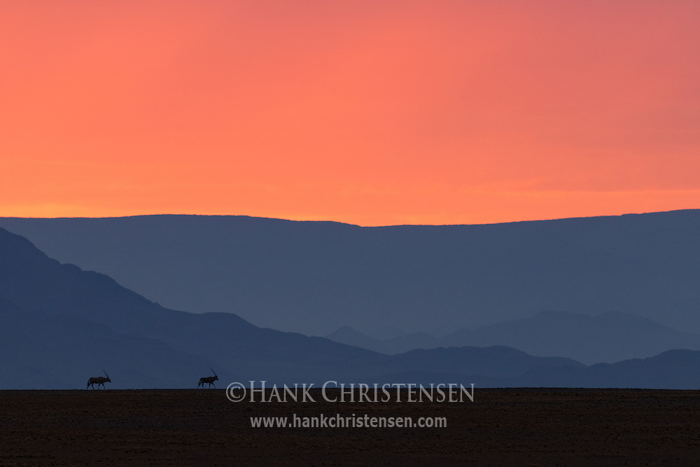Pre-dawn sunlight turns rare desert storm clouds orange over the Namib Desert, Namib-Naukluft National Park, Namibia.
