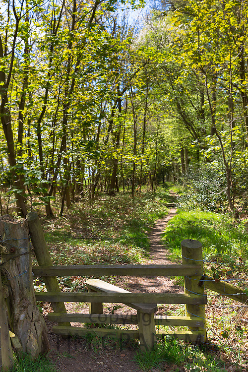 Traditional wooden style on country walk at Foxholes within Bruern Wood in The Cotswolds, Oxfordshire, UK