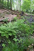 Bach, Naturschutzgebiet Kahle Haardt bei Scheid am Edersee, Nordhessen, Hessen, Deutschland | creek, nature reserve Kahle Haardt near Scheid on Lake Eder, Hesse, Germany