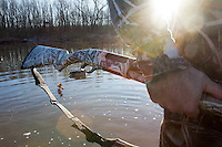 DUCK HUNTER WADING IN A MARSH AND CARRYING A MOSSBERG SHOTGUN