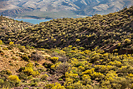 End of May and the Palo Verde trees are in bloom with Roosevelt Lake in the back ground.