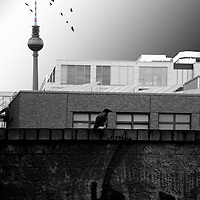 A crow standing on a dark and striking wall with graffiti before a series rectangular commercial building and the TV tower.