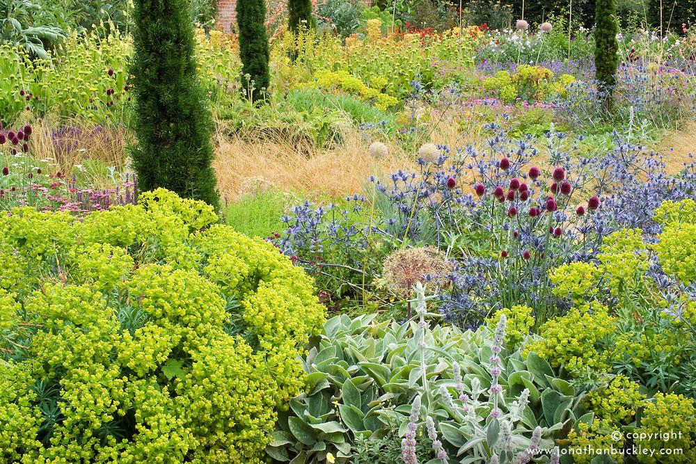 Allium sphaerocephalon, Stachys byzantina and Eryngium x zabelii with euphorbias and clipped yew pillars at Broughton Grange