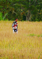 A woman standing in a golden rice field against a background of green trees. Bali, Indonesia.