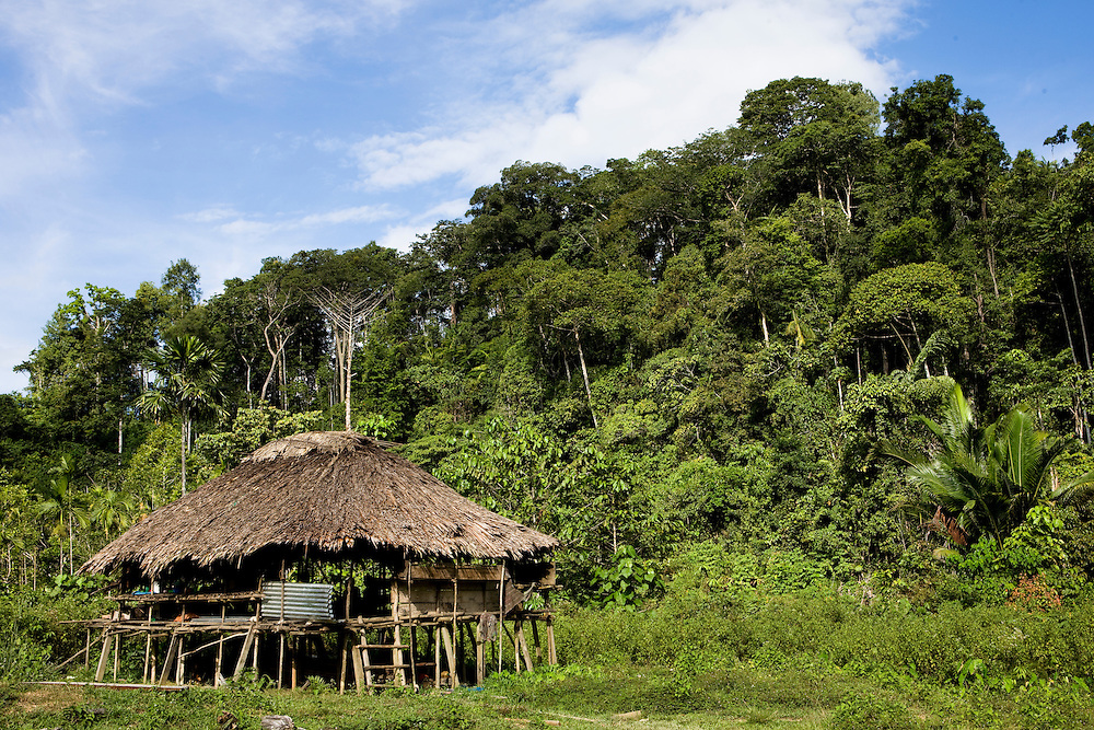 A house in the village of Sisik, Indonesia, which is near the 22,000 hectare palm oil plantation of the Sinarmas Group which employs 11,000 workers. The Sinarmas Group has plans for a 20,000 hectare expansion of the palm oil plantation on Sisik land, but it is opposed by local residents because the project will destroy the rainforest that feeds them, Sept. 3, 2008..Daniel Beltra/Greenpeace