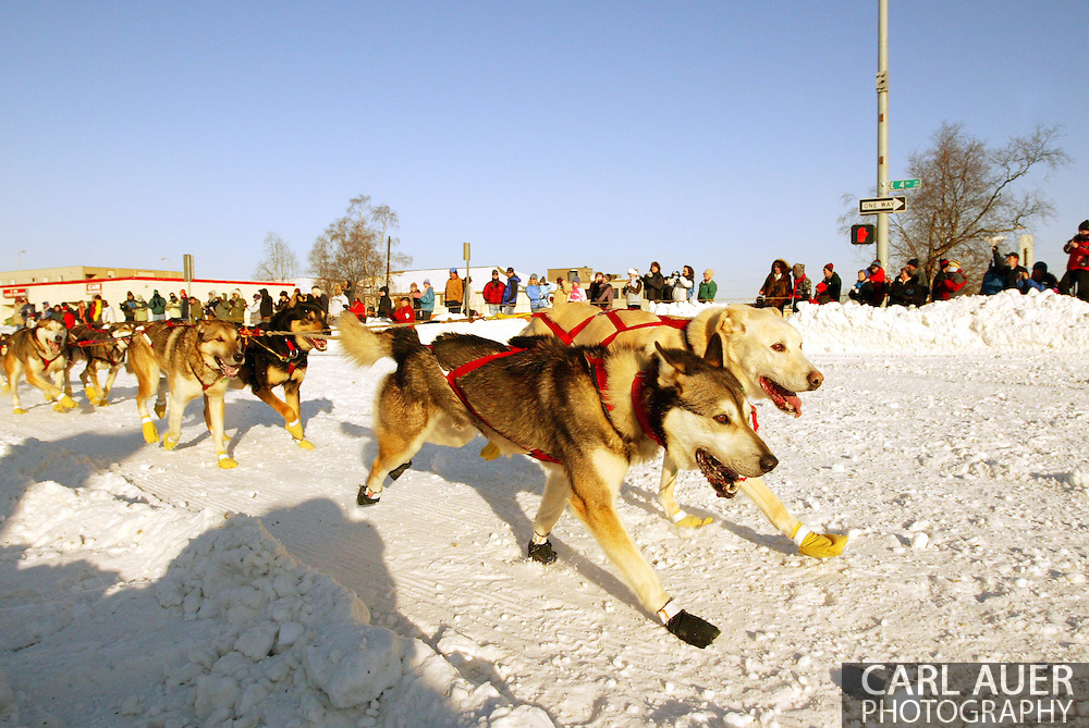3/3/2007:  Anchorage Alaska -  The lead dogs of Veteran Jeff King of Denali, AK sprint around the corner of 4th and Cordova during the Ceremonial Start of the 35th Iditarod Sled Dog Race