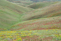 Hillside and drainage gully on Umptanum Ridge eastern Washington USA&#xA;<br />