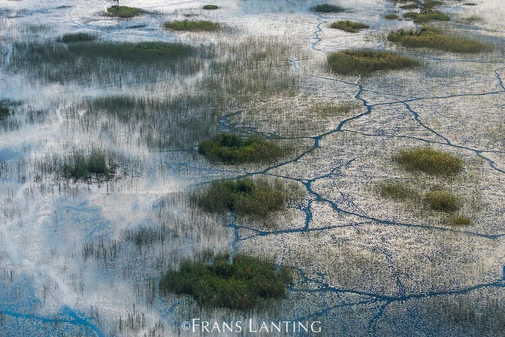 Aerial view of aquatic vegetation, Okavango delta, Botswana