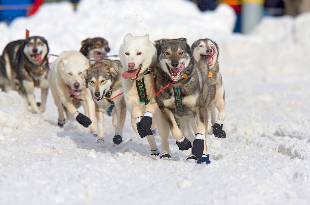 USA, Alaska, Anchorage, Sled dogs run through snow down 4th Avenue at start of 2005 Iditarod sled dog race